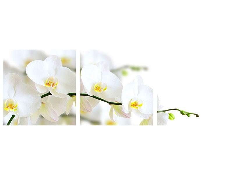 Panorama Aluminiumbild 3-teilig Weisse Orchideen