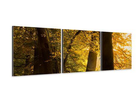 Panorama Aluminiumbild 3-teilig Herbstlaub