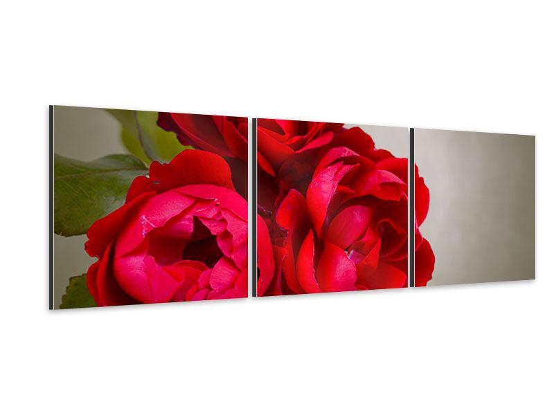 Panorama Aluminiumbild 3-teilig Drei rote Rosen