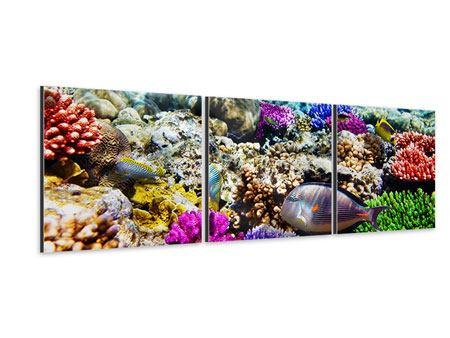 Panorama Aluminiumbild 3-teilig Fischaquarium
