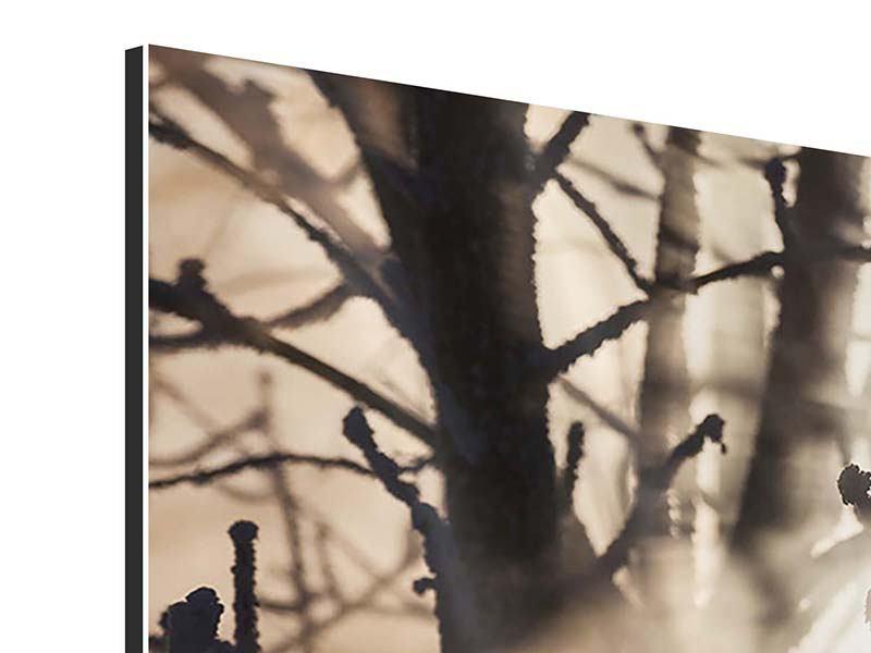 Panorama Aluminiumbild 3-teilig Äste im Schleierlicht