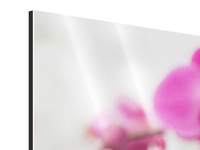 Panorama Aluminiumbild 3-teilig Das Symbol der Orchidee