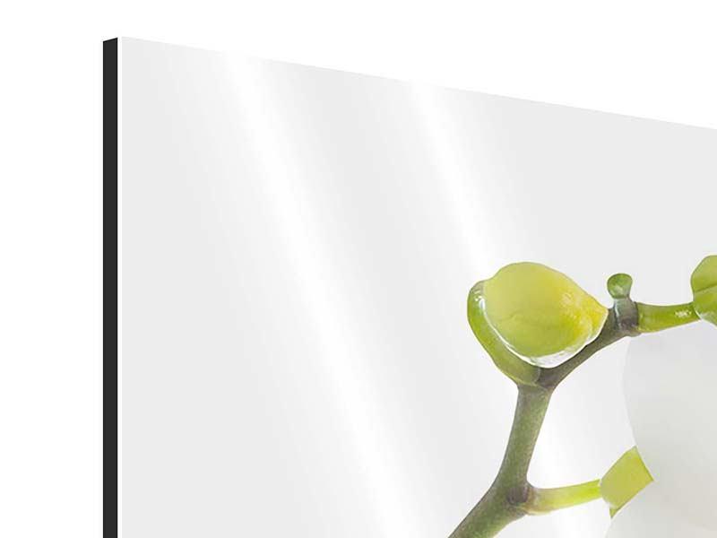 Panorama Aluminiumbild 3-teilig Orchideenliebe