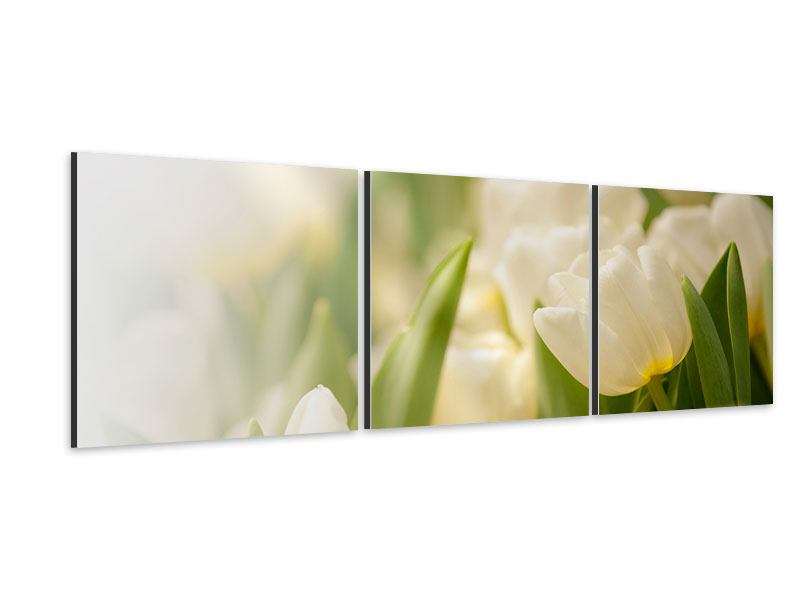 Panorama Aluminiumbild 3-teilig Tulpenperspektive
