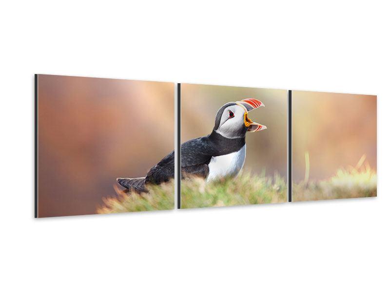 Panorama Aluminiumbild 3-teilig Der Papageitaucher