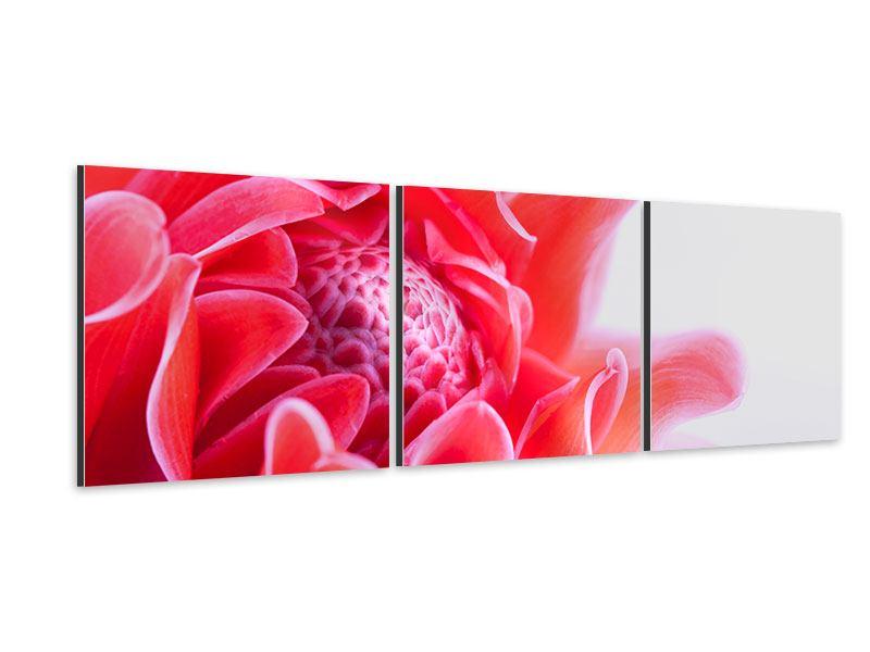 Panorama Aluminiumbild 3-teilig Etlingera XXL