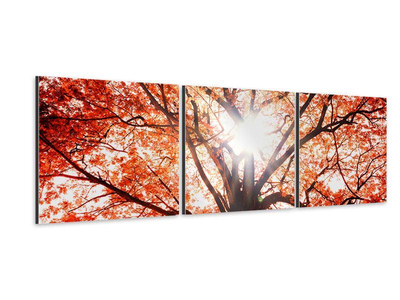 Panorama Aluminiumbild 3-teilig Herbstlicht
