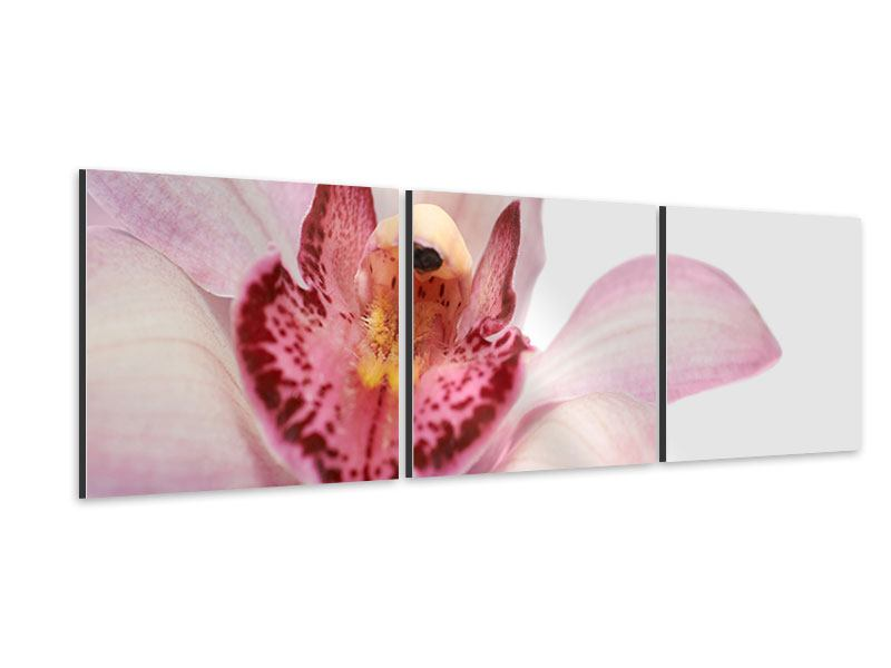 Panorama Aluminiumbild 3-teilig Orchideenblüte XXL