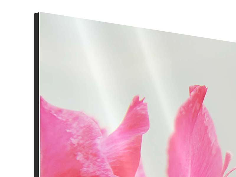 Panorama Aluminiumbild 3-teilig Gladiolen