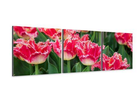 Panorama Aluminiumbild 3-teilig Die Tulpenwiese