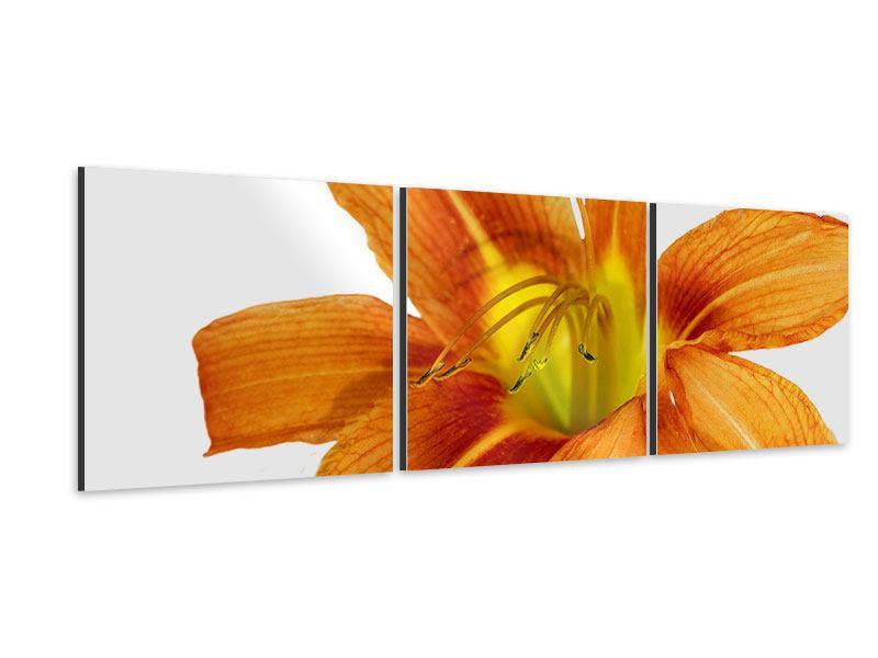 Panorama Aluminiumbild 3-teilig Die Tiger-Lilie