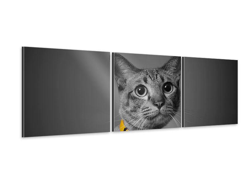 Panorama Aluminiumbild 3-teilig Katzenlady
