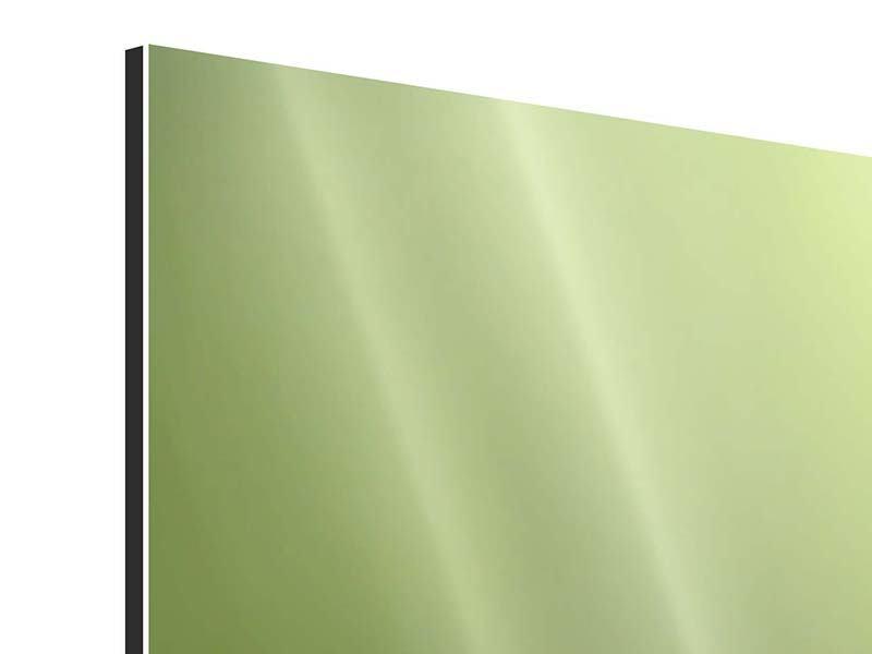 Panorama Aluminiumbild 3-teilig Pusteblume XL im Morgentau