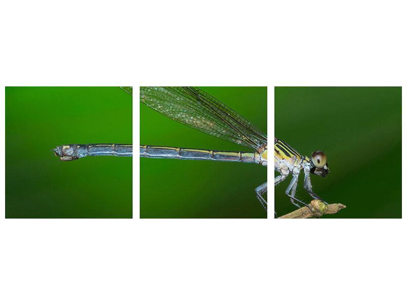 Panorama Aluminiumbild 3-teilig Die Libelle