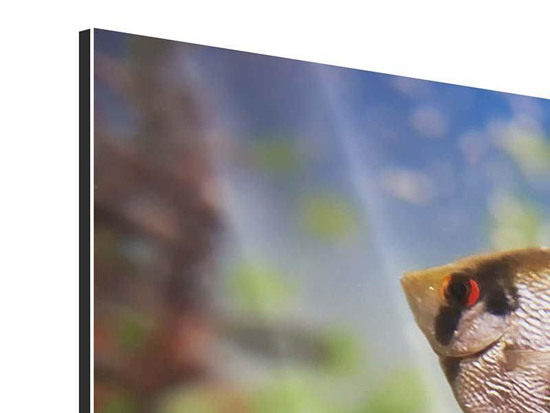 Panorama Aluminiumbild 3-teilig Bunte Fische