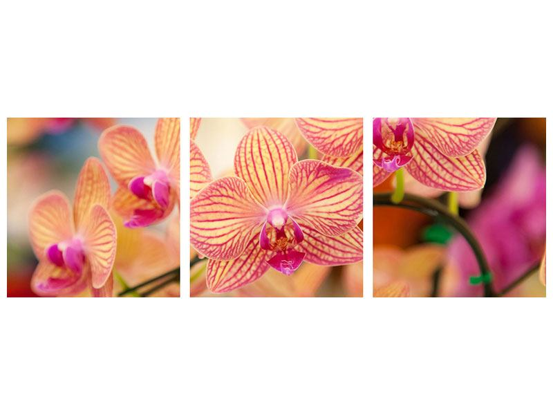 Panorama Aluminiumbild 3-teilig Exotische Orchideen
