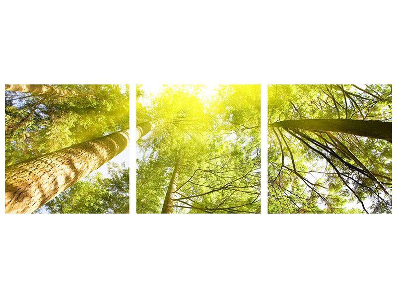 Panorama Aluminiumbild 3-teilig Baumkronen in der Sonne