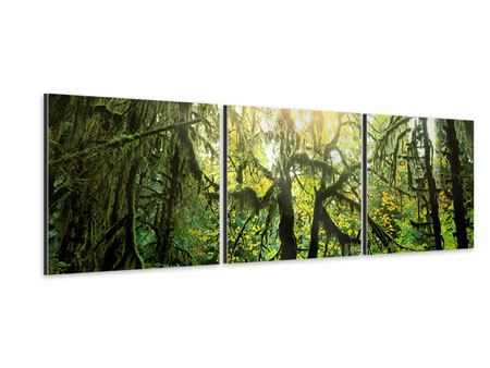 Panorama Aluminiumbild 3-teilig Verträumter Wald