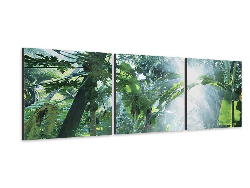 Panorama Aluminiumbild 3-teilig Dschungelstar