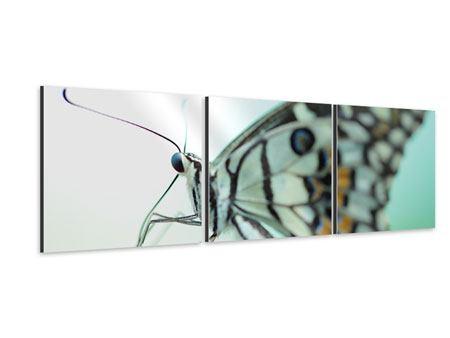 Panorama Aluminiumbild 3-teilig Schmetterling XXL