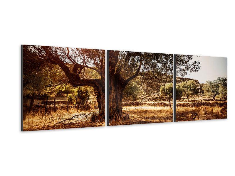Panorama Aluminiumbild 3-teilig Olivenhain