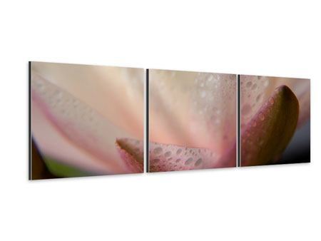 Panorama Aluminiumbild 3-teilig Close Up Seerose