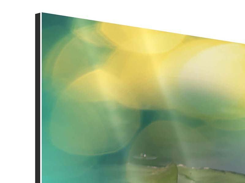 Panorama Aluminiumbild 3-teilig Lotus-Spiegelung
