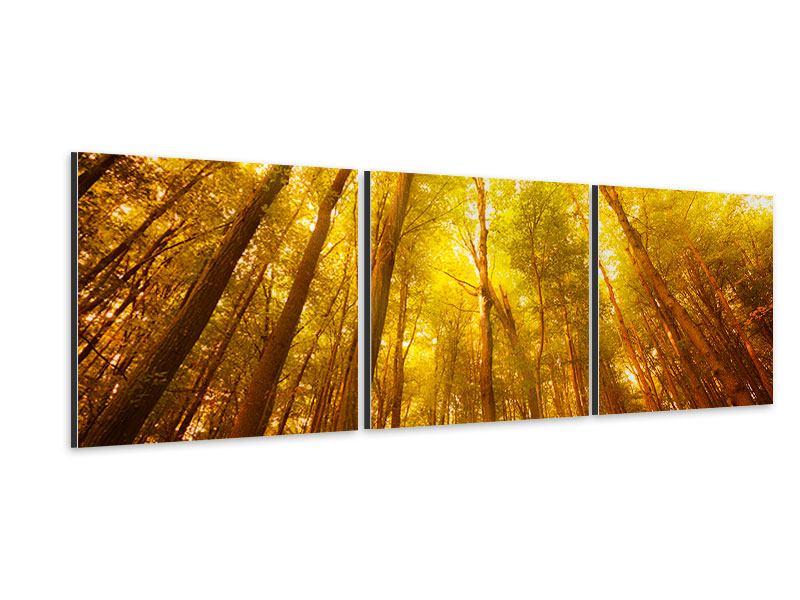 Panorama Aluminiumbild 3-teilig Herbstwald