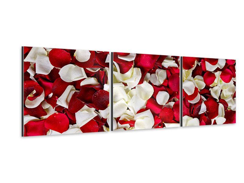 Panorama Aluminiumbild 3-teilig Rosenblätter