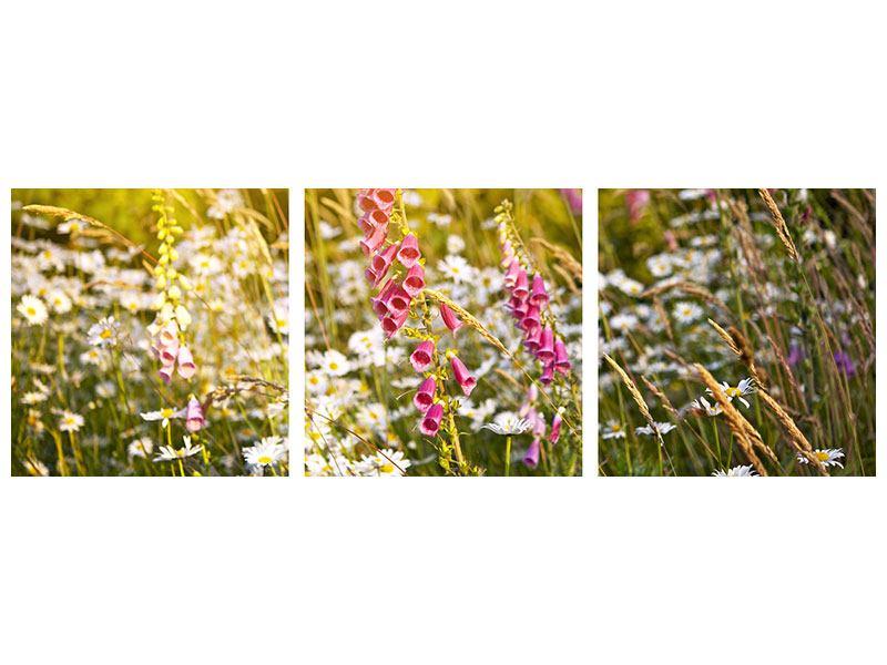 Panorama Aluminiumbild 3-teilig Sommerliche Blumenwiese