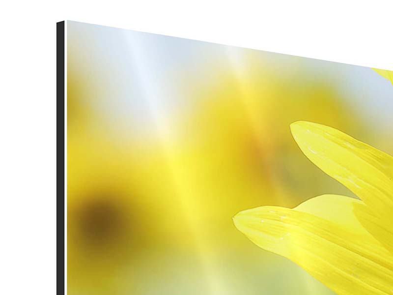 Panorama Aluminiumbild 3-teilig Die Blume der Sonne