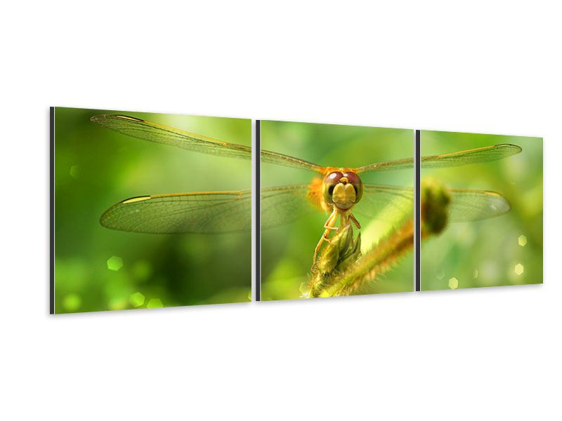 Panorama Aluminiumbild 3-teilig XXL-Libelle