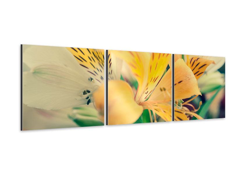 Panorama Aluminiumbild 3-teilig Tigerlilien