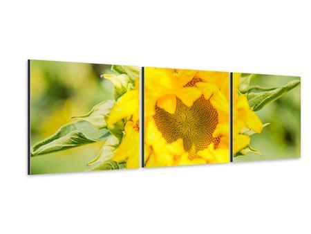 Panorama Aluminiumbild 3-teilig Wilde Sonnenblume