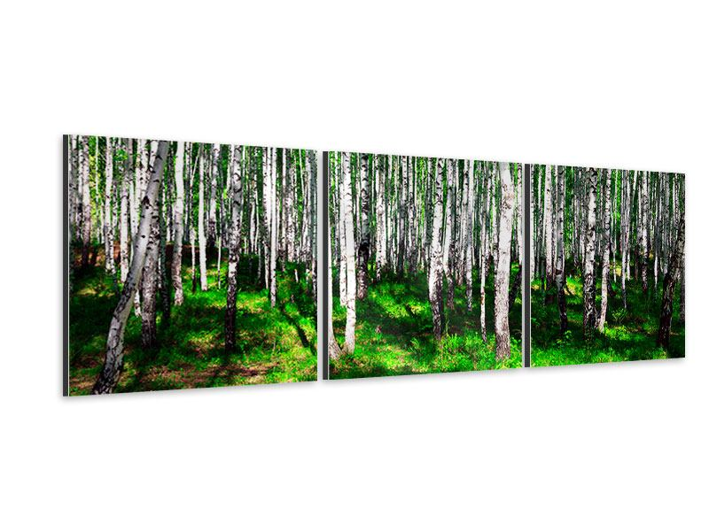 Panorama Aluminiumbild 3-teilig Sommerlicher Birkenwald