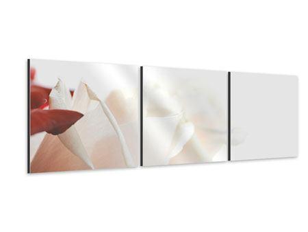Panorama Aluminiumbild 3-teilig Herrliche Rosen