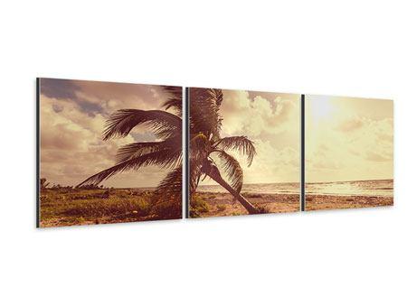 Panorama Aluminiumbild 3-teilig Die schiefe Palme