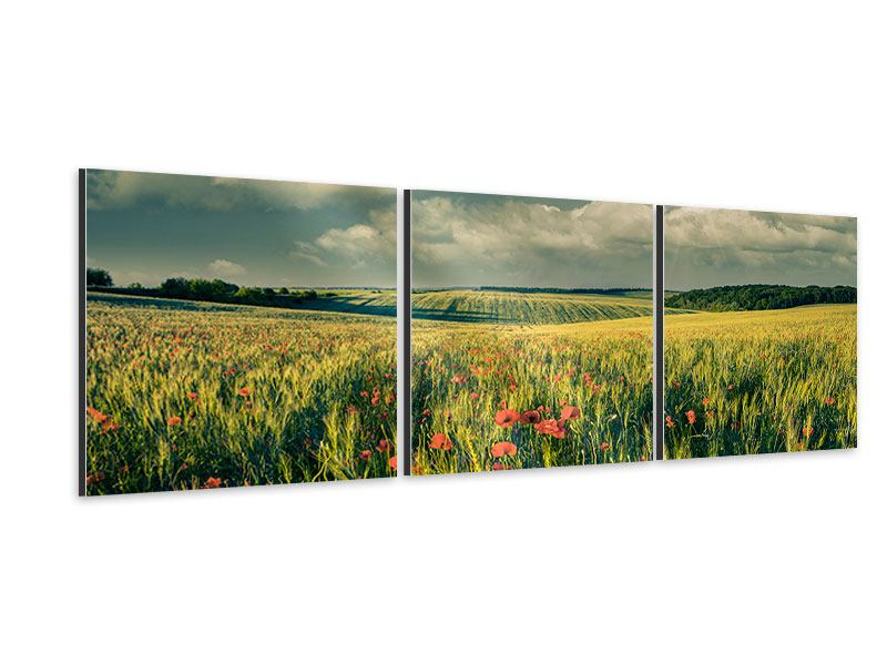 Panorama Aluminiumbild 3-teilig Der Mohn im Weizenfeld
