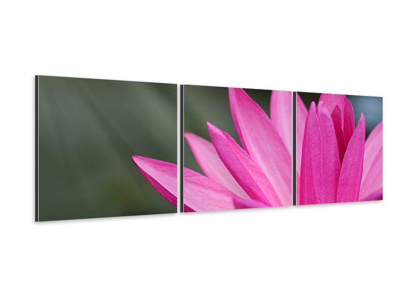 Panorama Aluminiumbild 3-teilig XXL Seerose in Pink