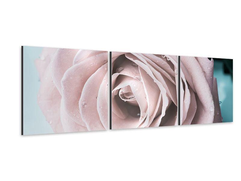 Panorama Aluminiumbild 3-teilig Pastellrose