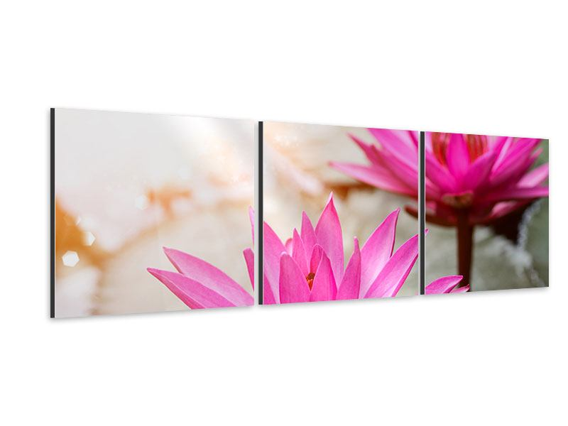 Panorama Aluminiumbild 3-teilig Lotus-Duo