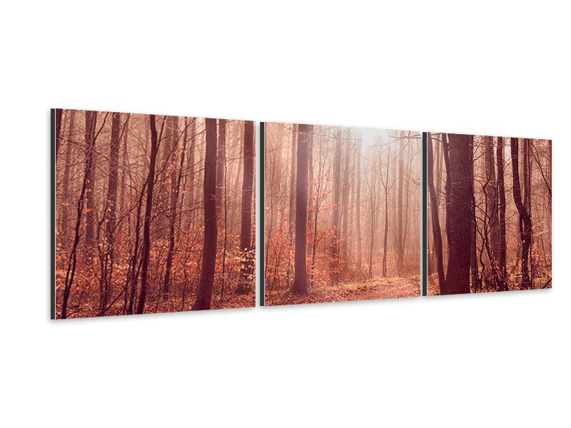 Panoramic 3 Piece Aluminium Print Sunset In Autumn Forest