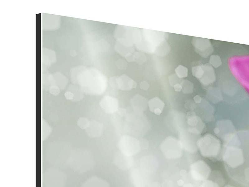 Panorama Aluminiumbild 3-teilig Libelle auf dem Seerosenblatt