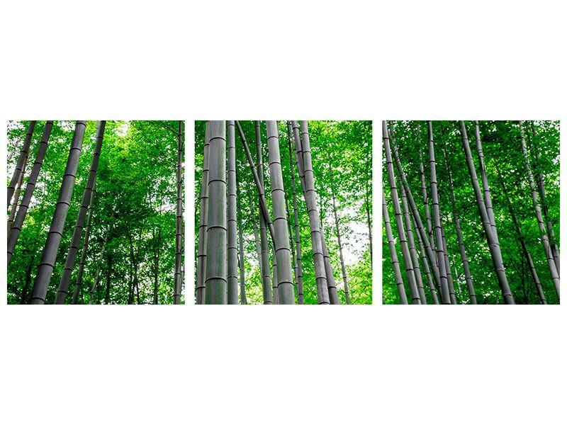 Panorama Aluminiumbild 3-teilig Bambuswald
