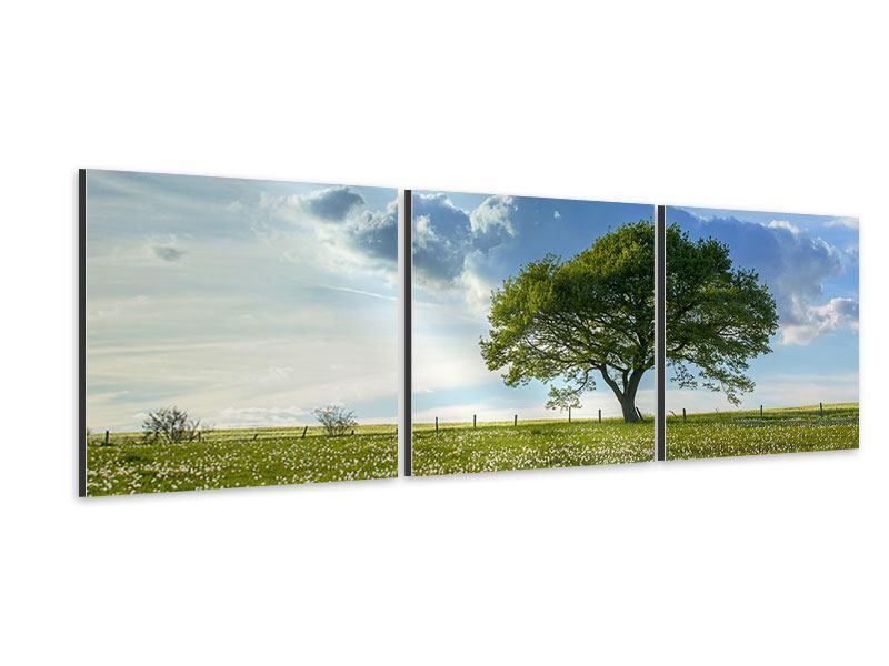 Panorama Aluminiumbild 3-teilig Frühlingsbaum
