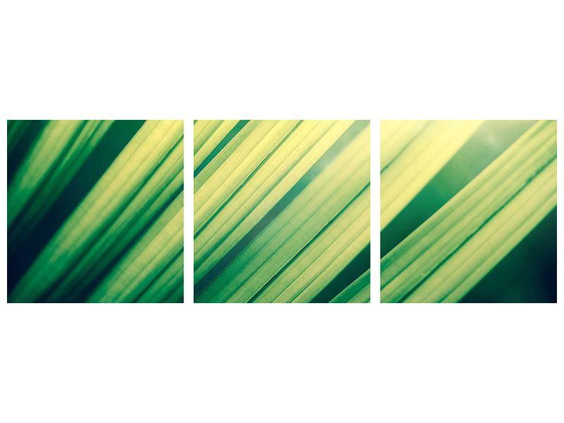 Panorama Aluminiumbild 3-teilig Beleuchtetes Palmblatt