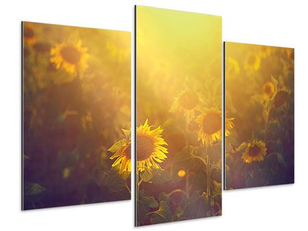 Aluminiumbild 3-teilig modern Sonnenblumen im goldenen Licht