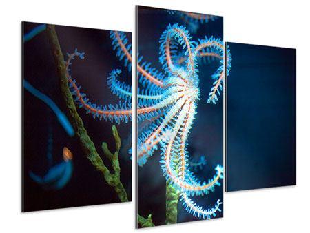 Aluminiumbild 3-teilig modern Aquarium