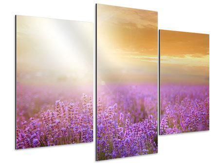 Aluminiumbild 3-teilig modern Sonnenuntergang beim Lavendelfeld