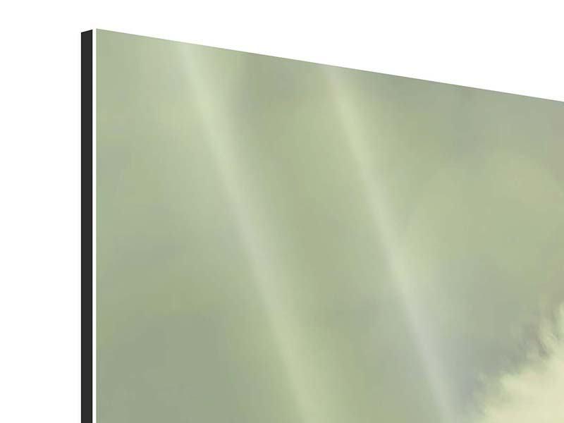 Aluminiumbild 3-teilig modern Die Pusteblume